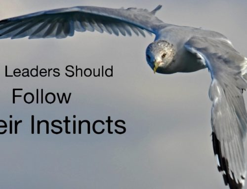 Why Leaders Should Follow Their Instincts